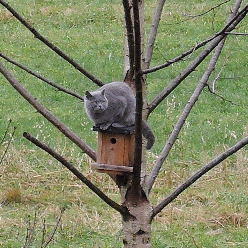 Nachbarkatze Lucy hat immer wieder komische Einfälle